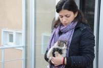 ONDOKUZ MAYıS ÜNIVERSITESI - Öğrenciler Ve Belediye Ekipleri Minik Kedi İçin Seferber Oldu