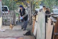 (Özel) Evinde Onlarca Kedi Besleyen Fedakâr Kadının Mama Çağrısı