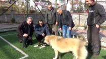 Sokak Köpeğini Sopayla Kovalarken Çekilen Görüntüleri Sosyal Medyada Yayılınca Önce Köpekten Sonra Herkesten Özür Diledi