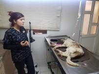 SARıLAR - Açlıktan Bitkin Düşen Sokak Köpeğine Belediye Sahip Çıktı
