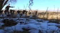 Kar Yedikten Sonra Kesilen Kazlar Kargoyla Sofralara Ulaşıyor