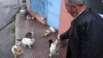 HAYVAN SEVGİSİ - Kediler Her Gün Onun Yolunu Gözlüyor