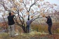 Kışın 12 Hane Kalan Köyde, Kuşlar Üşümesin Diye 350 Kuş Evi Asıldı