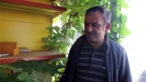 YERKESIK - Muğla'da Hırdavatçı Dükkanının İçinde Büyüyen İncir Ağacı İlgi Çekiyor