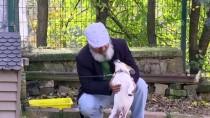 KALP MASAJI - Nefessiz Kalan Köpeği Kalp Masajıyla Hayata Döndürdü