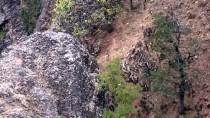Tunceli'de Yaban Keçileri Av Yasağı Ve Yemleme Çalışmalarıyla Korunacak
