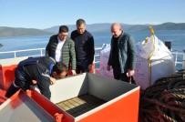 AMATÖR BALIKÇI - Avrupa'da Tüketilen Her 3 Balıktan Biri Türkiye'den Gidiyor