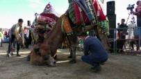 DEVE GÜREŞLERİ - Pehlivan Develer Kozlarını Buharkent Arenasında Paylaştı