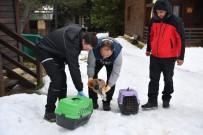 YAVRU KÖPEKLER - Uludağ'da Yavru Köpekler Donmaktan Kurtarıldı