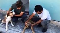 Sokak Köpeğinin Burnuna Batan Olta İğnesi Belediye Ekiplerince Çıkarıldı
