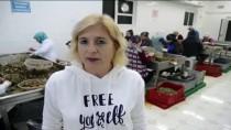 SALYANGOZ - Aydın'dan Salyangoz İhracatıyla 2 Milyon Dolar Gelir Sağlanıyor