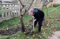 Meyve Ağaçlarının Bakım Mevsimi Geldi