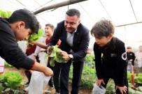 Minikler Kurdukları Serada Organik Sebze Yetiştiriyor
