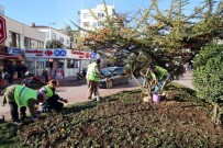 Sinop'ta 57 Bin Lale Toprakla Buluşuyor