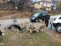 Sokak Hayvanlarını Gönüllüler Besliyor