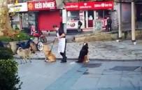 Vatandaşın Süpürge İle Masaj Yaptığı Köpeklerin İç Isıtan Halleri Kamerada