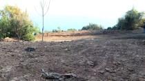 GÜNCELLEME - Adalar'da Ruam Hastalığına Yakalanan 81 At İtlaf Edildi