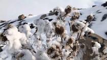 Iğdır Ve Kars'ta Kış Zorlukları Ve Güzelliğiyle Yaşanıyor