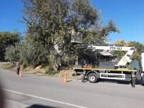 Manavgat'ta Tehlike Oluşturan Ağaçlar Budandı