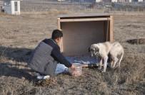 Eziyet Edilen 'Şeker' Köpek Artık Kaymakamlık Konutunda