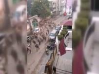 YENI DELHI - Hindistan'da Devam Eden Protestolarda Ölü Sayısı 20'Ye Yükseldi