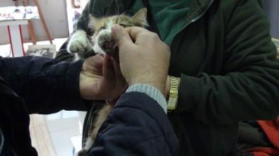 Otomobilin Altına Giren Kediyi Tamirci Çıkardı