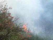 DOĞANTEPE - Gemlik'de Orman Yangını