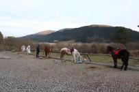 ABANT - Abant'ta Ruam Şüphesi Olan Atların Sahiplerine De Test Yapıldı
