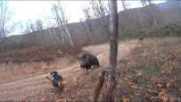 Avcı domuzun saldırısından son anda kurtuldu!