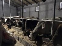 KURBAN BAYRAMı - Besicilerin Umudu Kurban'a Kaldı