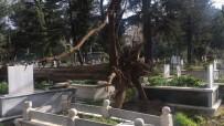 ELEKTRİK DİREĞİ - İnegöl'de Ağaçlar Devrildi, Birçok Mezar Zarar Gördü