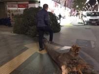 Tokat'ta Fırtına Ağaçları Kökünden Söktü