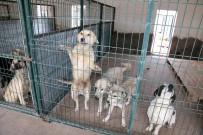 AKSARAY BELEDİYESİ - Aksaray Belediyesi Sahipsiz Hayvanları Koruyup Tedavilerini Yapıyor