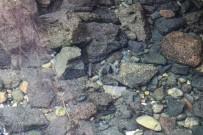 BALıKLı GÖL - Diyarbakır'ın Tarihi Anzele Suyu 'Balıklıgöl'e Döndü