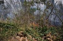 İTFAİYE MÜDÜRÜ - Giresun'da 4 Noktada Örtü Yangınları Devam Ediyor