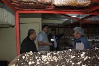 Isparta'da 53 Bin Metrekare Alanda 5 Bin Ton Mantar Üretimi