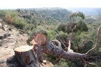 ORMAN ALANI - Mersin'deki Ağaç Katliamı İle İlgili 1 Kişi Gözaltına Alındı