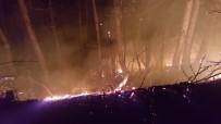 MEHMET GÜLER - Ordu'daki Orman Yangınlarına Müdahale Sürüyor