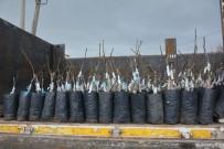 TARIM ARAZİSİ - Yunusemre Belediyesinin Üreticilere Fidan Desteği Sürüyor
