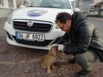 17 AĞUSTOS - Kartepe Zabıtasından Sokak Hayvanlarına Şefkat Eli