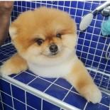 YEŞIL ÇAY - Köpeklere Özel Güzellik Merkezleri İlgi Görüyor