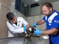 Yaralı Kaya Kartalı Tedavi Altına Alındı