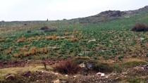 REYHANLI - Hatay'da 'Dağ Ceylanı Yaban Hayatı Geliştirme Sahası' İlan Edilmesi