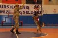 DAMAT İBRAHİM PAŞA - JAKEM'de Eğitimi Tamamlayan 62 Köpek 31 İlde Göreve Başlayacak