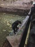 ÇORUH - Köprüde Mahsur Kalan Kediyi Genç Adam Kurtardı