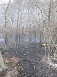 Dikmen'de Orman Yangını