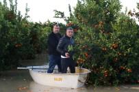 MEHMET AKıN - Göle Dönen Bahçede Kayıkla Hasat