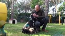 Antalya'da Tüfekle Vurulan Köpeğin Yavruları Yanından Ayrılmadı