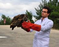 AVRASYA - (Özel) Tedavisi Tamamlanan Avrasya Kartal Baykuş'u Doğaya Salındı