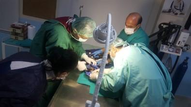 Doktor Ve Veteriner Hekimler Yavru Köpeği Kurtarmak İçin Seferber Oldu